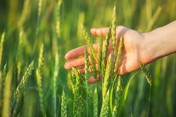Modernizacja gospodarstw rolnych dłużej – wnioski do 20 września