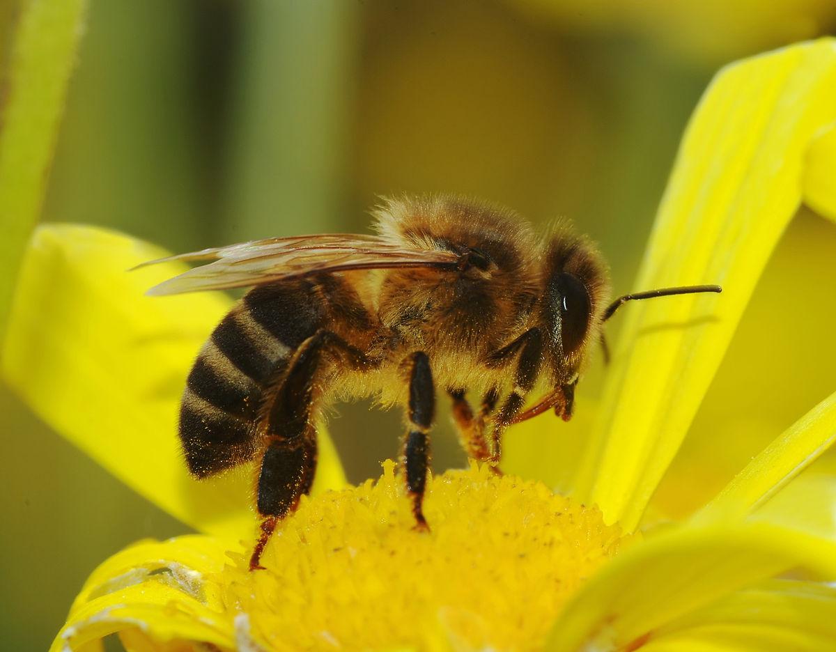 Chroń pszczoły i inne owady zapylające!!!